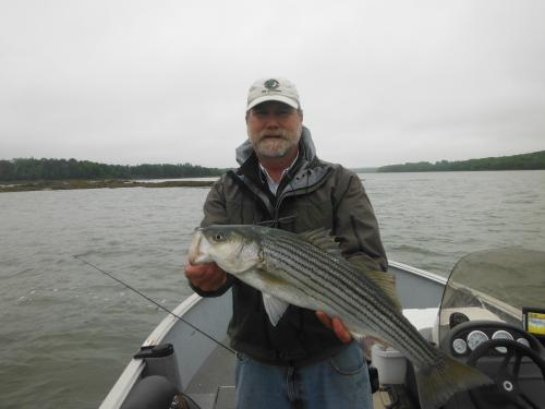 Saint George River Striper