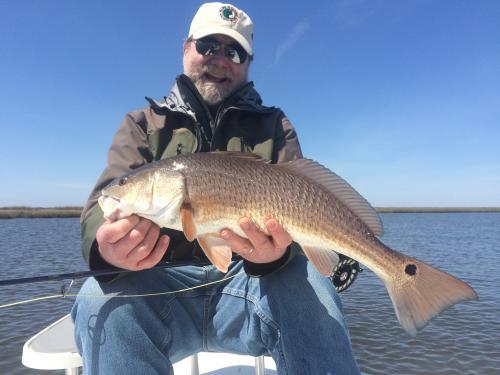 Don Louisana redfish